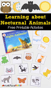 printable animal activities free nocturnal animals printables nocturnal animals learning and