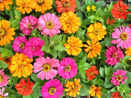Image Flower Garden by 50 Best Types Of Flowers U2013 Pretty Pictures Of Garden Flowers