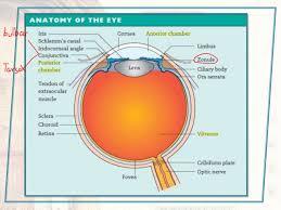 Anatomy Of The Eye Eye Anatomy