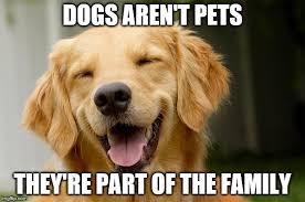 Aww Thank You Meme - happy dog imgflip