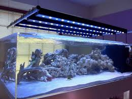 led lights for coral tanks understanding marine aquarium lighting blue earth aquariums
