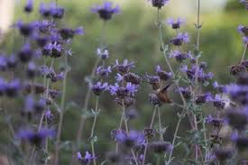 Hummingbird On A Flower - flying marvels how to attract hummingbirds to your garden