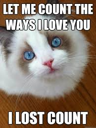 Grumpy Cat Meme Love - let me count the ways i love you lost anti grumpy cat litle pups