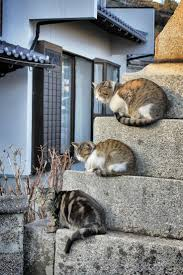 18 best cats of shikoku images on pinterest cat ehime and the o