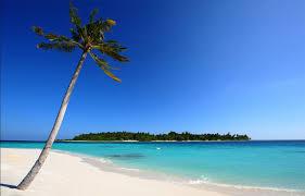 one palm tree one island free wallpaper