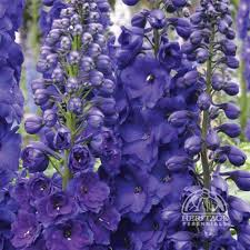 10 Best Perennials And Flowers by 103 Best Perennials I Want Images On Pinterest Beautiful Flowers