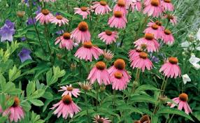 perennials for the edge fine gardening