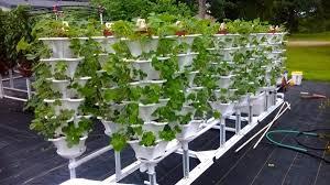 rooftop garden ezgro garden