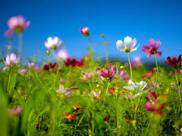 spring flower nature wallpapers wallpapers13 com