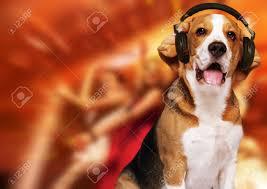 Radio Collar For Beagle Beagle Dog Wearing Headphones Over Disco Background Stock Photo