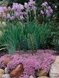 Best Plants For Rock Gardens Best Plants For Rock Gardens Low Maintenance Plants Plants And Rock