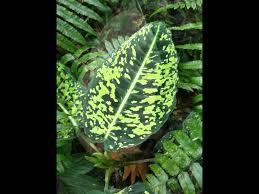 Cairns Botanical Garden by Cairns Botanic Gardens Youtube