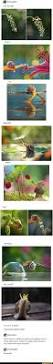 best 25 snail ideas on pinterest snails smiling animals and