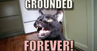 Talking Cat Meme - hilarious talking kitty cat gets grounded forever
