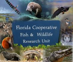 Florida wildlife images Florida cooperative fish and wildlife research unit jpg