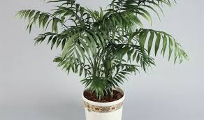 plant house plants near me marvelous best place to buy