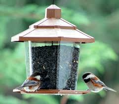 attract birds to feeder black oil sunflower seeds attract the
