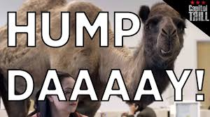 Hump Day Camel Meme - geico hump day twerk mix capitol trill youtube