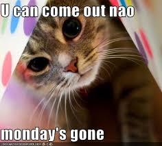 Happy Tuesday Meme - happy tuesday