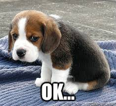 Ok Sad Face Meme - ok so sad puppy quickmeme