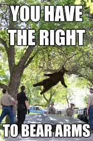 Right To Bear Arms Meme - you have the right to bear arms boulder bear quickmeme