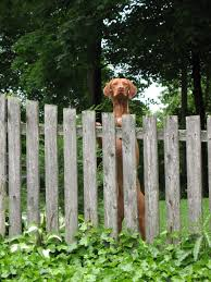 outdoor outdoor dog fence lovely decorating cool vinyl chain link