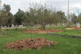 Best Fruit Trees For North Carolina - preparing fruit trees for winter organic gardening mother