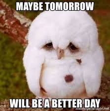 Depressed Drinking Meme - maybe tomorrow will be a better day depressed owl meme generator