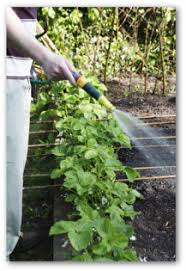 Strawberry Garden Beds Best Tips For Growing Strawberry Plants