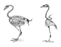 antique images free digital collage sheet 2 vintage bird