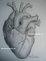 the human heart by chloe748 on deviantart