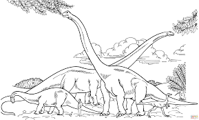 coloriage barosaurus hypsélosaure brachiosaure et gallimimus