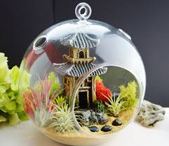 astonishing where to buy air plants 42 about remodel best design