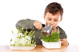 نکات مهم آبیاری گیاهان آپارتمانی