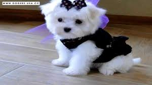 cutest puppy dogs ever very cute dog photos collection youtube
