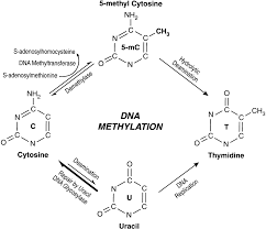 dna methylation blood journal