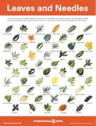 pdf files of leaf needle seed bark identification it is amazing