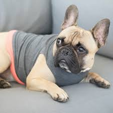 Comfortable Dog 24 Best Jolie Dog Tops Images On Pinterest Tank Tops Tanks And