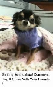 Meme Chihuahua - best 25 ideas about chihuahua meme find what you ll love