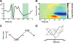 An Information Maximization Approach To Blind Separation And Blind Deconvolution Modulation Of Visually Evoked Cortical Fmri Responses By Phase Of