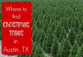 live christmas trees where to find live christmas trees in