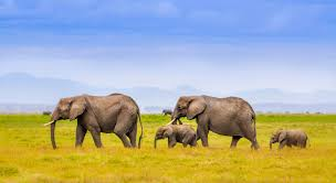 elephants family hd image free gamefree