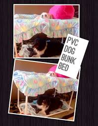 Bunk Bed For Dogs Pvc Dog Bunk Bed 5 Steps