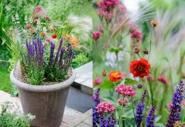 rainbow tz blog container gardening otesha maua yako low