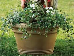 how to plant a summer flower pot hgtv