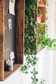 Window Planters Indoor by Best 20 Ivy Plants Ideas On Pinterest Pothos Plant Plant Care