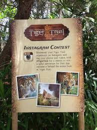 Zoo Increases Sales And Enhances Social Media Contest San Diego Zoo Safari Park Tigertrail