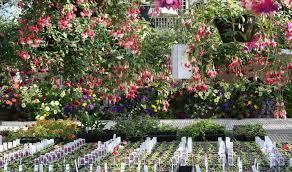 garden flower plants for sale darxxidecom
