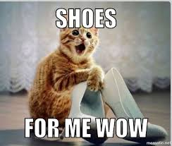 Silly Cat Memes - 21 funny and silly cat memes random funny cat