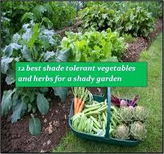 shade vegetable garden u2013 exhort me